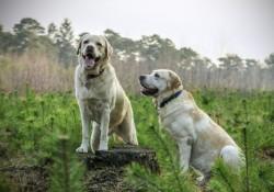 Kvalitets foder til hund og kat hos simbasfoder.dk